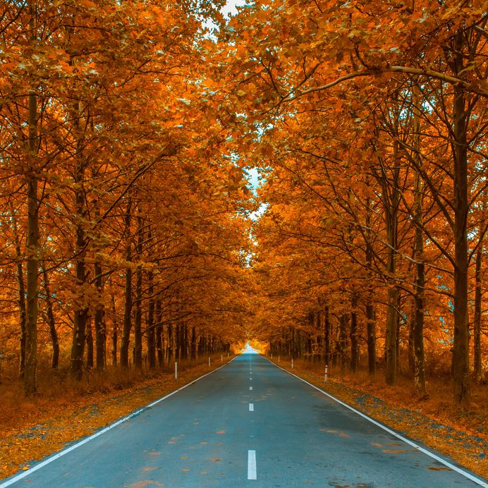 fall leaves and road